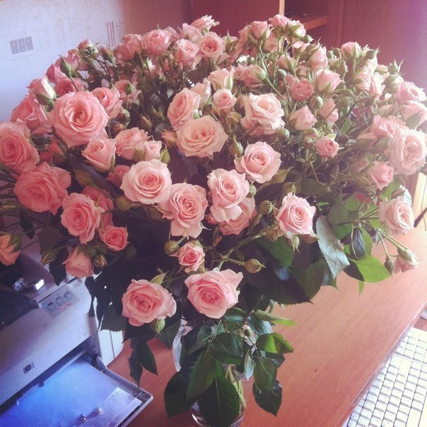 цветы для друзей