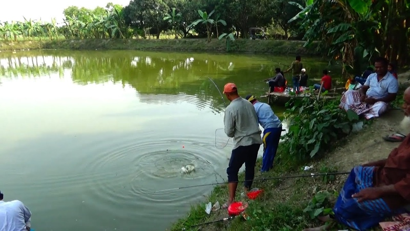 Nice Fishing Videos By Using Rod And Reel In Village Pond