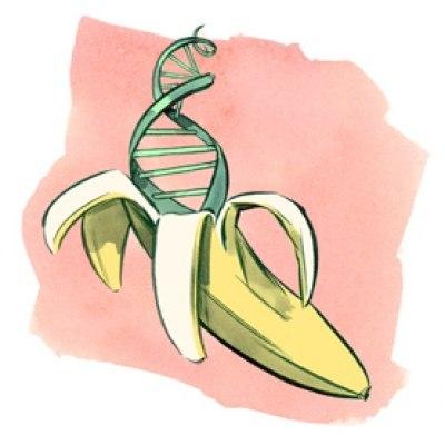 Днк банана +и человека, днк банана +и человека совпадают