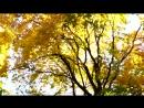 Una breve passeggiata per il parco d'autunno Video di dinak photographer utm source=ig profile share igs