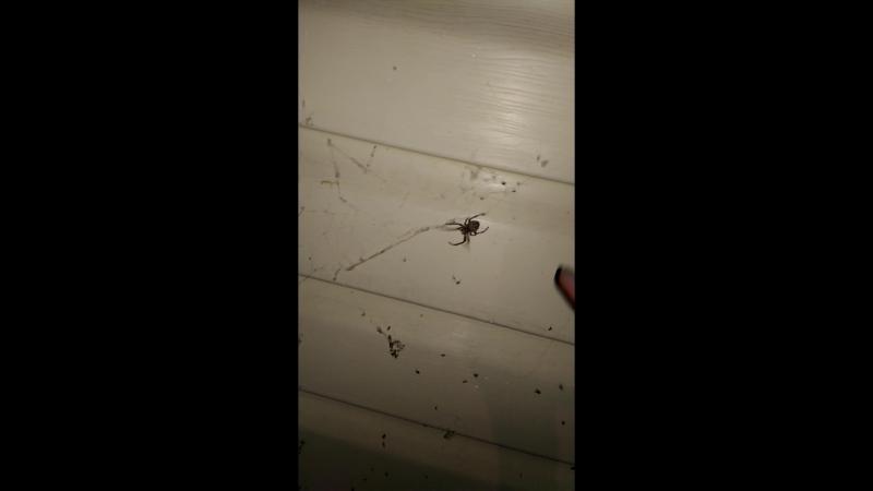 Настя докопалась до паука.mp4
