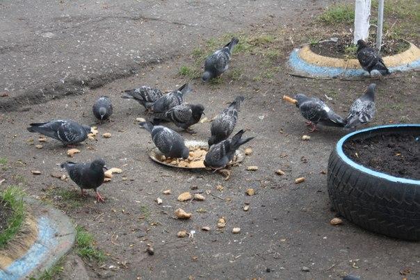 Вкопали корыто для голубей. Странно, но тут довольно чисто. Как они откалупывают голубиный помет?