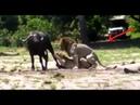 10 необъяснимых явлений животном мире