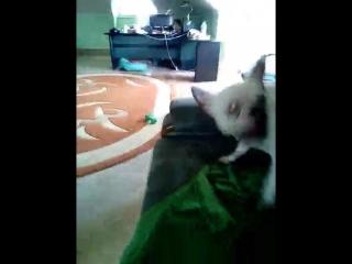 Сонька играет с папкой