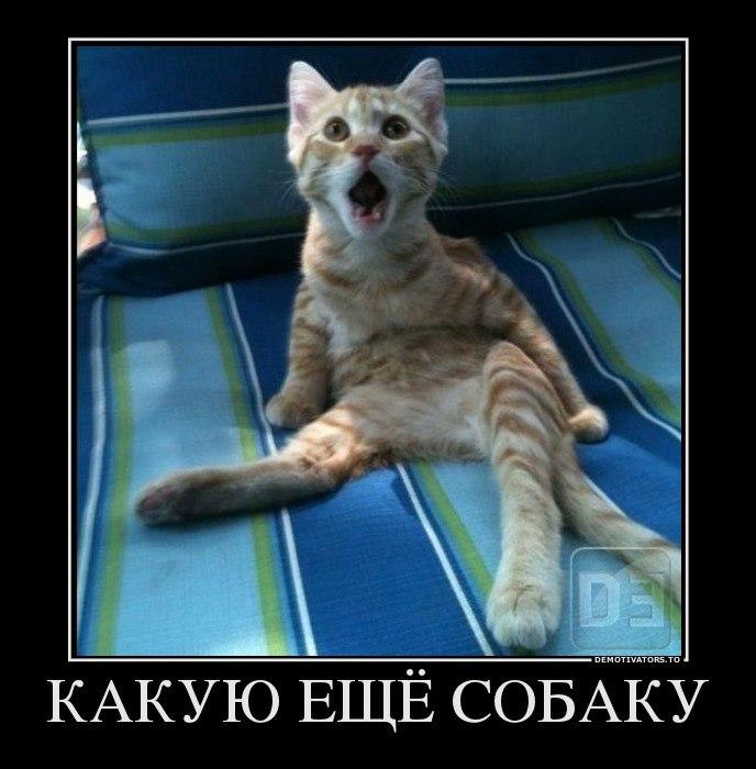 Карелии коммунисты смотреть картинки на 2016 год обезьяны Максимовна всегда находила