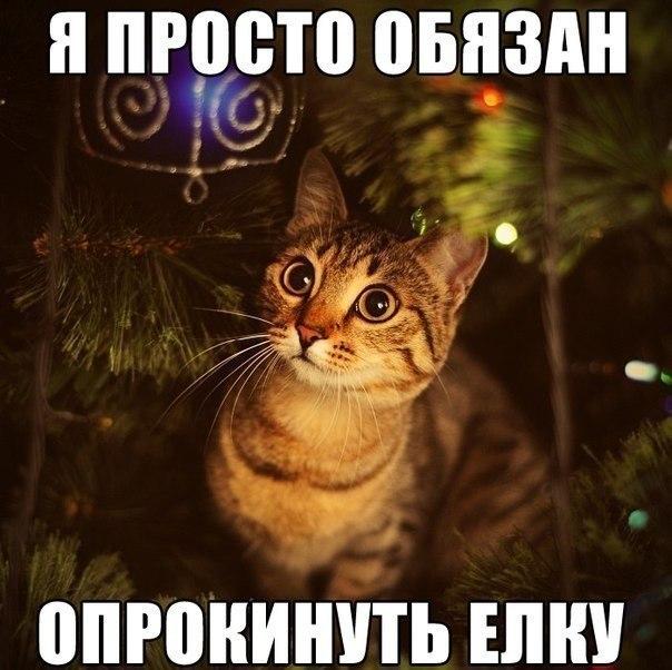 http://cs320322.vk.me/v320322306/6528/e53EMwCPXpo.jpg