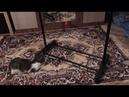 3867). 28.11.2018 - Кошечка Танзания уехала домой! (видео из дома)