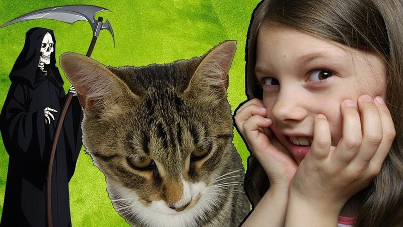Мой Кот Спас Мне Жизнь 10 Фактов Кот Тигра | Мисс Ариана и Pet Cat