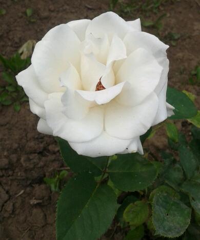 Цветы у Ликки Ei6bHNV5MtE