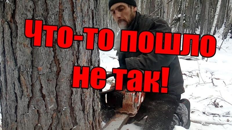 Экстремальные лесорубы, как не надо валить деревья - работа бензопилой