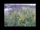 Река Москва в Подмосковном городе Лыткарино! Архив фотографий.