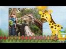 Слайд-шоу Зоопарк для малышей