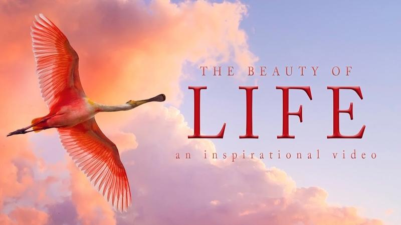 The Beauty Of Life - Inspirational Speech By Richard Dawkins