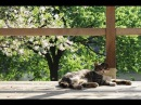 Sleeping Cats Chillout Lounge Mix