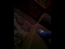 Настюша Родина - Live