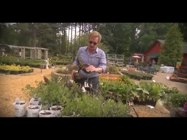 Солнечные сады в одной цветовой гамме Переведено ландшафтной студией ДриадаС