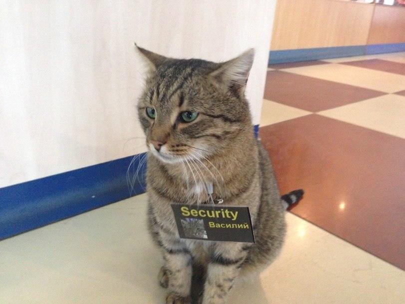 Почему в некоторых странах кошки могут получить пенсию?