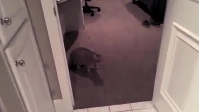 Взрывающиеся коты