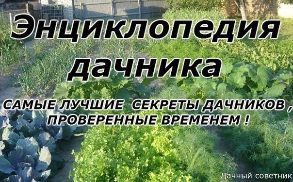 10 СЕКРЕТОВ ОПЫТНОГО САДОВОДА. Получить хороший урожай непросто, а уж тем более рекордный. Существует много причин, которые этому препятствуют. Это и нестабильные погодные условия, и заболевания