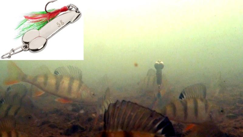 Ловля окуня зимой! Камера КАЛИПСО МОРМЫШ! Подводная съемка