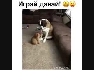 Это надо же...  Знает же, что коты так играют, просёк фишку)