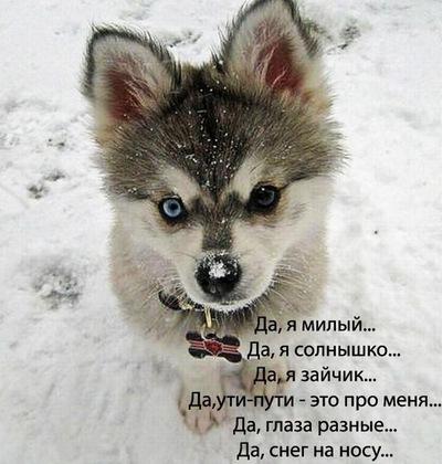 Zik Asakura, 25 января , Краснодар, id125430539