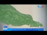 Юго-запад Москвы атаковала тополиная моль - Россия 24