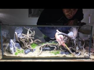 Aquascaping double-sided aquarium- Rhino VS Octopus by Laurent Garcia.mp4