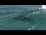 Stamatis Spanoudakis - Waves