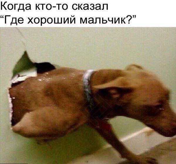 Фото №456242529 со страницы Михаила Кравцова
