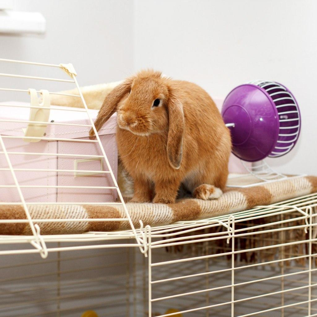 Как сделать клетку для кроликов своими руками - чертежи 16