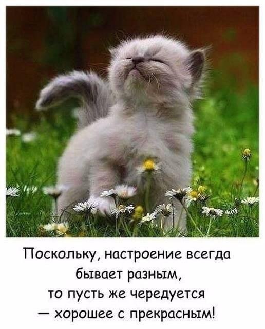 https://pp.userapi.com/c543103/v543103212/34f2d/Pdv0bW40a7U.jpg