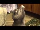 Хозяйка поёт, а кот зажигает смеялся долго