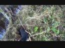 молодой гончий первый раз кого то облаял в лесу