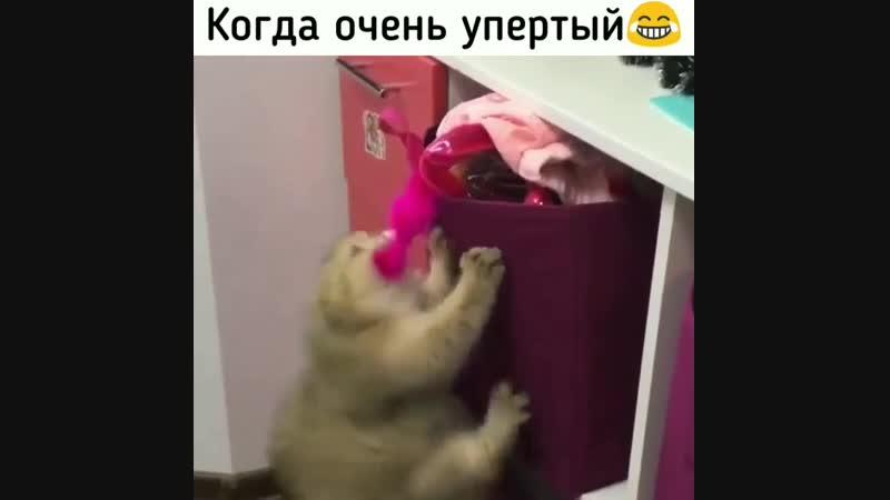 Упёртый кот