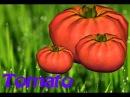 Гайд по выращиванию томатов в DayZ Standalone