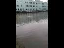 охота уток на рыб