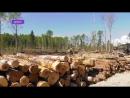 """Наворотили Ущерб от действия черных"""" лесорубов до сих пор считают"""