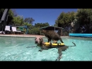 GoPro Didga the Dog Surfing Cat