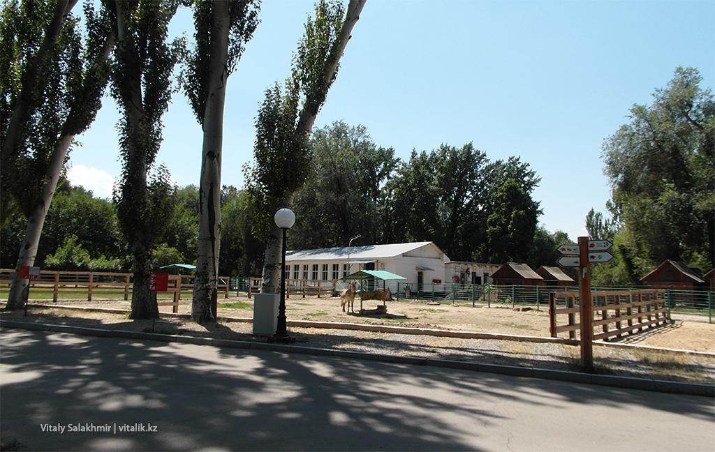 Загон зебр в зоопарке Алматы 2018