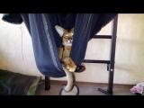 Коте в прототипе походного подвесного кресла
