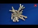 Окаменелый Коралловый куст