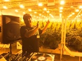 Danny The Wildchild - Scratching live from the grow (420)