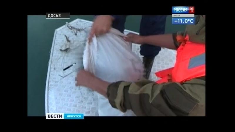 Больше полтонны незаконного омуля изъяли за два месяца в Иркутской области