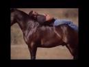 Лошадка танцует.mp4