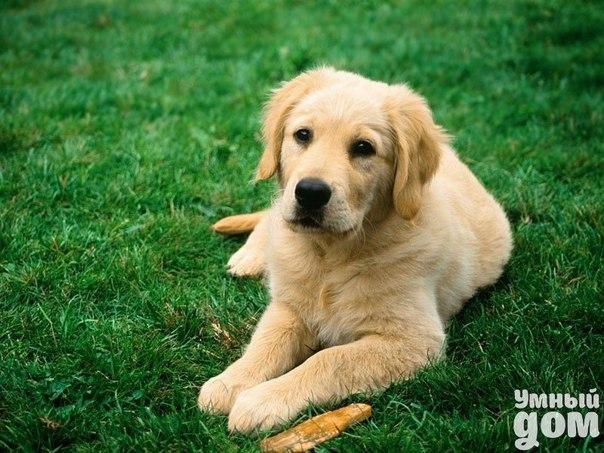 Какие прививки нужны собакам до года? Трудно найти хозяина четвероногого друга, который равнодушно относится к календарю прививок, особенно собакам до года. Прививка необходима щенкам для того, чтобы повысить иммунитет, не допустить проявления таких серьезных заболеваний, как и многих других. Давайте попробуем разобраться, какие именно прививки до года должен получить ваш питомец? Прививки щенкам необходимо обязательно делать по персональному календарю, особенно если вы хотите, чтобы он был…