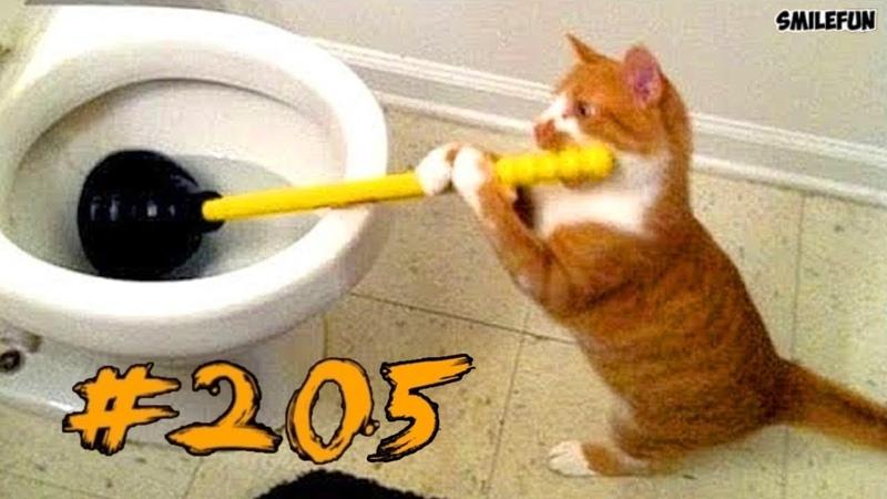Смешные коты и котики 2018 приколы про котов до слез под музыку - Смешные кошки 2018 Funny Cats
