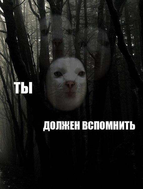 http://cs410328.vk.me/v410328367/c03b/7CwlVUgctww.jpg