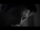 Scott McCall / Teen Wolf