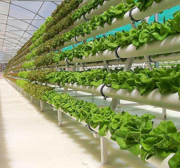 Сайты о выращивании растений 664